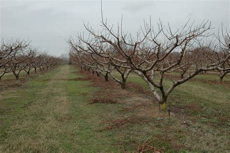 New Orchards Are Like Marriage