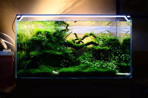 freshwater aquarium aquascape design ideas aquascape aquarium designs dzuls interiors