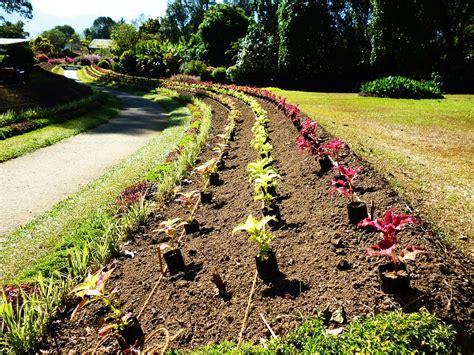 Starting A Flower Garden how to effortlessly start a flower bed from scratch