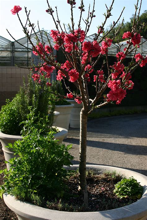 plant varieties that are both edible and ornamental networx