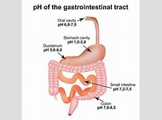 PH Of The Gastrointestinal Tract Esophagus, Stomach