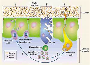 Research Review: Good bacteria, gut health and exercise ...