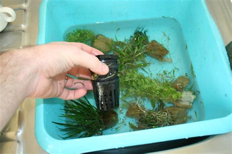 mise en place d un aquarium en photo