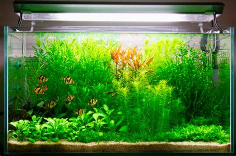 what co2 can do for you and your plants practical fishkeeping magazine