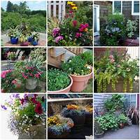 container garden ideas 66 Things You Can Grow At Home: In Containers, Without a ...