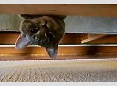 Upside down kitten spying on big cat Daily Picks and Flicks