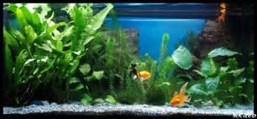 mod 232 le aquarium poisson