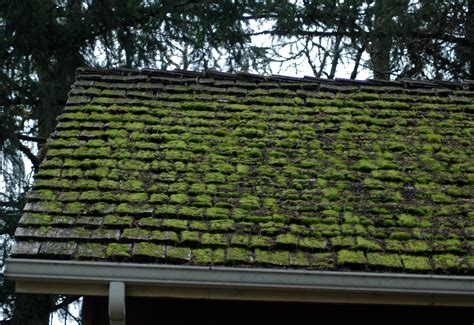 Clean Shingles With Oxygen Bleach Roof Truss Size Calculator Florida Roofing Solutions Kayak Rack Pt Cruiser Metal Loans Ability Plus Reviews Installing Steel Panels Pipe Boot Installation Four Seasons Snohomish