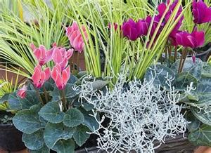 fleurs d hiver en pot atlub