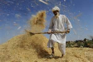 threshing and winnowing a cry for justice