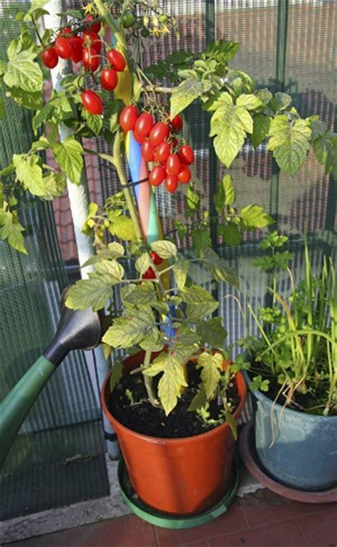 balkonpflanzen balkon gestalten gardening