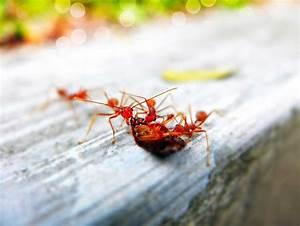 Hilft Mehl Gegen Ameisen : die besten und effektivsten hausmittel gegen ameisen in der wohnung ~ Whattoseeinmadrid.com Haus und Dekorationen