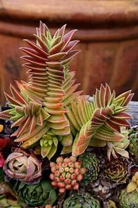 1321 best images about Badass Plants on Pinterest | Agaves ...