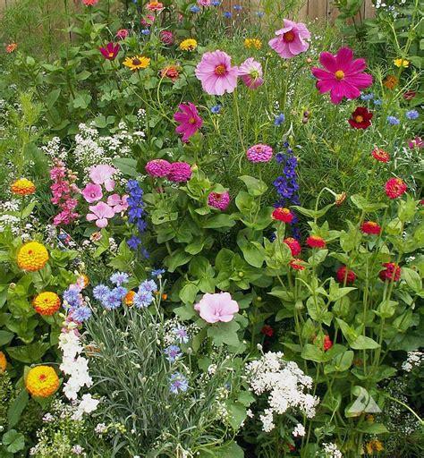 Cottage Garden Blend, Wildflower Seed  Urban Farmer Seeds