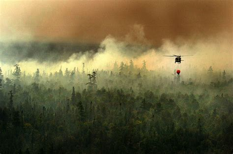 Managing Our Forests Carbon, Climate Change, And Fire