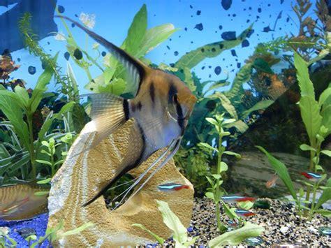les plus beaux poissons de mon aquarium