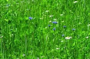 Wann Mäht Man Rasen : wann am besten rasen gras s en ~ Markanthonyermac.com Haus und Dekorationen