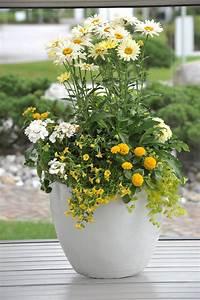 Die Schönsten Balkonpflanzen : richtig kombinieren die sch nsten bl hpflanzen f r den k bel das gr ne medienhaus ~ Markanthonyermac.com Haus und Dekorationen