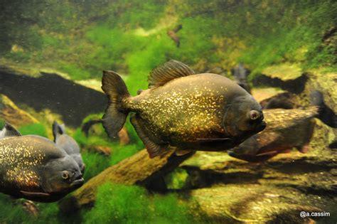 rencontres sauvages aquarium porte doree site rencontre pour ado gratuit sans sinscrire