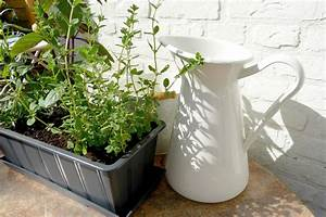 Balkon Sauber Machen : kr uter auf dem balkon pflanzen mit dieser anleitung gelingt es ~ Markanthonyermac.com Haus und Dekorationen