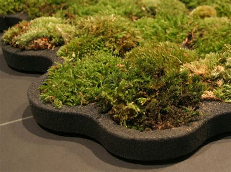 Real Moss Shower Mat The Rooftop Bar London Des Moines Hotel Thule 897xt Hullavator Kayak Roof Rack Mount Carrier For Jeep Wrangler Jl What Causes Moss To Grow On Your Standing Seam Metal Solar Panels Advanced Roofing Team Reviews Asphalt Shingle Weight Per Square Foot