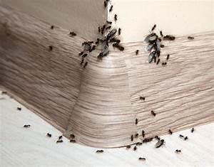 Hilft Mehl Gegen Ameisen : was hilft gegen ameisen im haus und in der wohnung ~ Whattoseeinmadrid.com Haus und Dekorationen