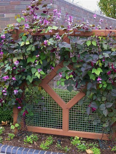 Use Fastgrowing Plants To Solve Landscaping Problems Hgtv