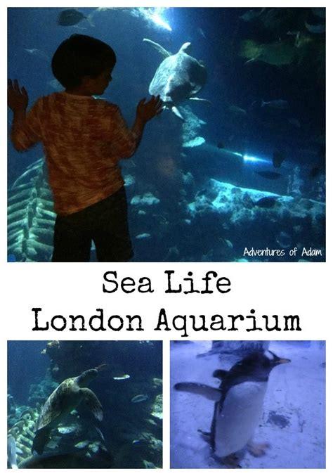 sea aquarium with 365 tickets adventures of adam