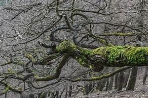 Das Herz Des Waldes : das herz des waldes forum f r naturfotografen ~ Markanthonyermac.com Haus und Dekorationen
