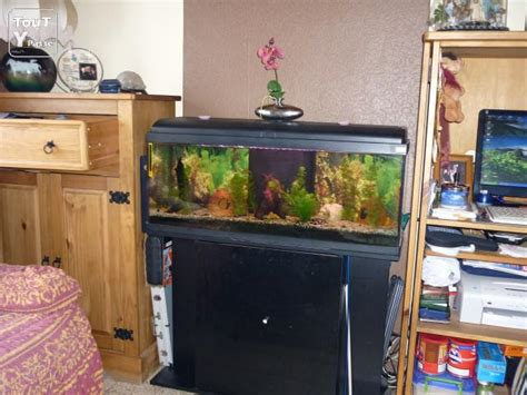 aquarium a vendre toutypasse be