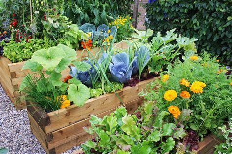 Tips For Starting A Home Vegetable Garden  Eco Talk