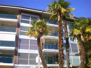 Palmen Für Die Wohnung : moderne wohnung mit palmen stockbild bild von geb ude 11363147 ~ Markanthonyermac.com Haus und Dekorationen
