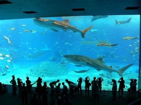 things largest aquarium in world