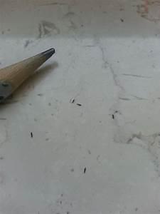 Mücken In Der Wohnung Was Tun : kleine tiere im mehl was tun wohn design ~ Markanthonyermac.com Haus und Dekorationen