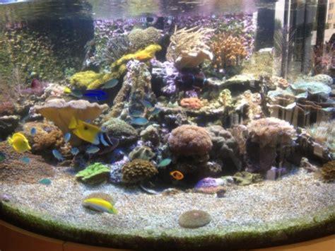 entretien d un ensemble compos 233 d un aquarium de 1000 litres d un refuge de 250 litres et d une
