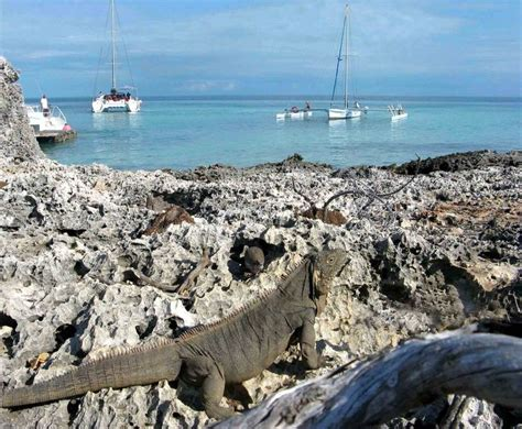 Catamaran Cruise In Cuba by 58 Best Cuba Travel Network Destinations Images On
