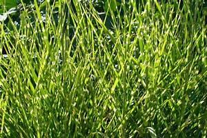 Gräser Kübel Terrasse : gr ser schneiden unsere tipps ~ Markanthonyermac.com Haus und Dekorationen
