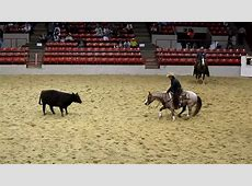 Houston Rodeo Professional Cutting Horse Competition YouTube