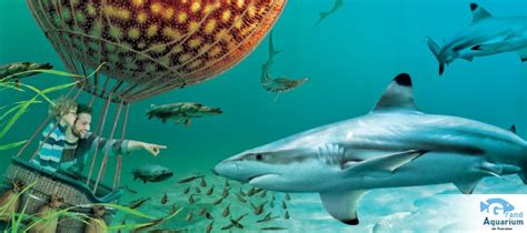 aquarium de touraine vivez une exp 233 rience unique en famille val de loire