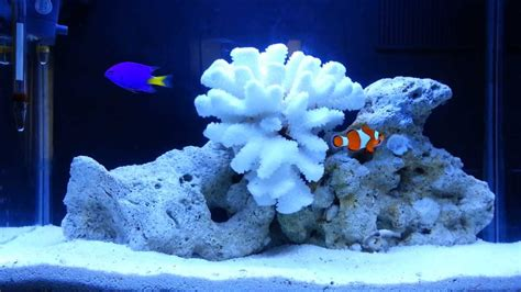 20 gallon marine aquarium