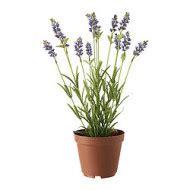 fejka plante artificielle en pot lavande ikea ikeapedia