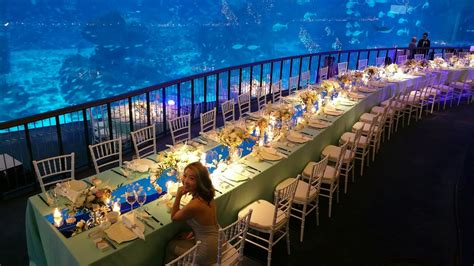 taykexin why you should hold your wedding the sea aquarium in singapore
