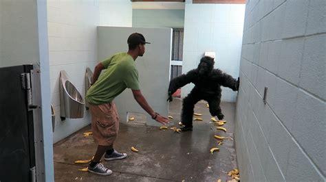gorilla in bathroom prank viral viral