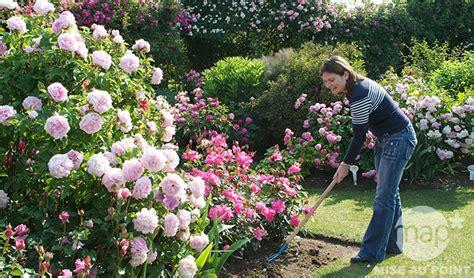 entretien des rosiers en fleurs 224 l automne jardinerie truffaut conseils rosiers truffaut