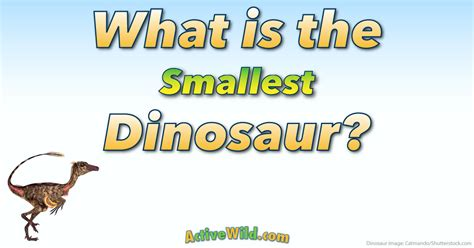 What Is The Smallest Dinosaur List Of Small Species With. Free After Effects Title Templates. How To Write An Appeal Letter For Parking Ticket. Ms Access Templates 2013 Template. Mail To Send Resumes Template. Sample Letter To Patient Regarding Insurance Template. Volunteer Work Cover Letters Template. My Favourite Place Essay Template. Mortgage Amortization Template Excel Template