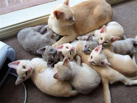 port 233 e de chat chaton sur chat mignon