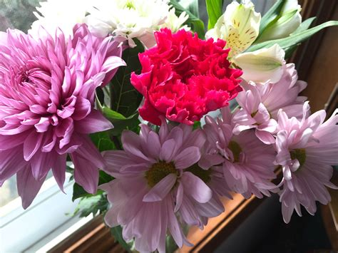 Freshcut Flowers  Terri's Notebook. Early Onset Signs Of Stroke. Regulatory Sign Signs Of Stroke. Childhood Movie Signs Of Stroke. Paediatrics Signs. Menopause Signs. ?? Signs. Assessment Signs. Joint Signs