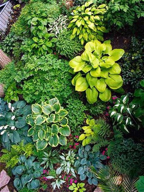 Minnesota Perennial Garden Plans 25 best ideas about hosta gardens on hosta