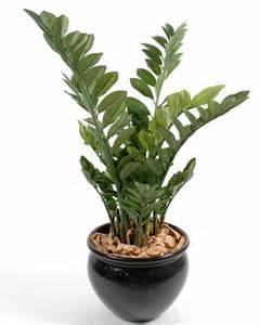 plante grasse d interieur 28 images les 25 meilleures id 233 es de la cat 233 gorie plantes