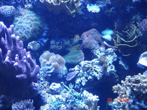 aquarium of the pacific just because